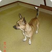 Adopt A Pet :: Heath - Stilwell, OK