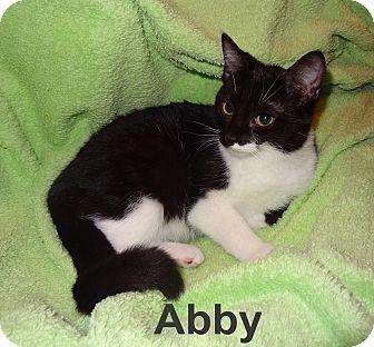 Domestic Shorthair Cat for adoption in Bentonville, Arkansas - Abby BW