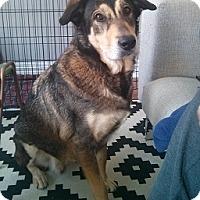 Adopt A Pet :: Dozer - Hamilton, ON