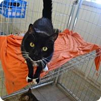 Adopt A Pet :: Noah K - East Smithfield, PA