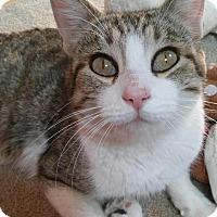 Adopt A Pet :: Cleo - Witter, AR