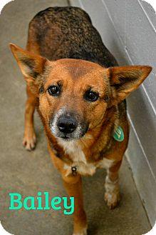 Australian Cattle Dog Mix Dog for adoption in Beaumont, Texas - Dixie