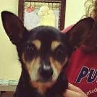 Adopt A Pet :: Mario - Winder, GA