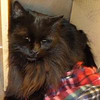 Adopt A Pet :: Otis - Logan, UT