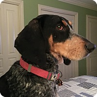 Adopt A Pet :: JUNEbug - Hagerstown, MD