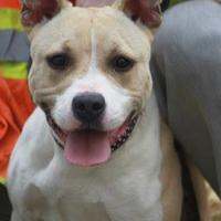 Adopt A Pet :: Gypsy - Russellville, KY