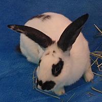 Adopt A Pet :: Sabrina - West Palm Beach, FL