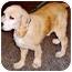 Photo 2 - Cocker Spaniel Mix Dog for adoption in Old Bridge, New Jersey - Jake