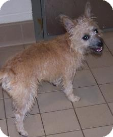 Terrier (Unknown Type, Small) Mix Dog for adoption in Jackson, Michigan - Tara