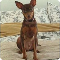 Adopt A Pet :: Tigger - West New York, NJ
