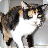 Adopt A Pet :: Patty - Mobile, AL