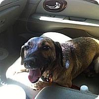 Adopt A Pet :: Jericho - Ranger, TX