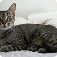 Adopt A Pet :: Cassie - Reston, VA