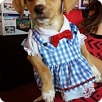 Adopt A Pet :: Baby Lovey - Marlton, NJ