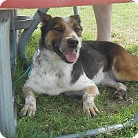 Adopt A Pet :: Summer - Lockhart, TX