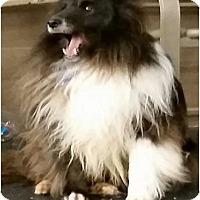 Adopt A Pet :: Asher - COLUMBUS, OH