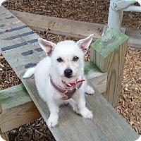 Adopt A Pet :: Marci - Chicago, IL