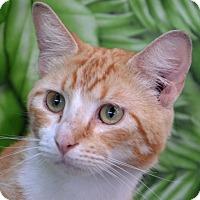 Adopt A Pet :: Redman - Englewood, FL