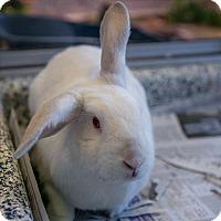 Adopt A Pet :: Litha - Golden, CO