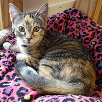 Adopt A Pet :: Triscuit - Waxhaw, NC