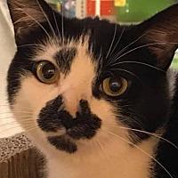 Adopt A Pet :: Brayden - Furlong, PA
