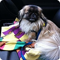 Adopt A Pet :: Autumn - Vansant, VA