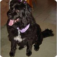 Adopt A Pet :: Princess - Lee's Summit, MO