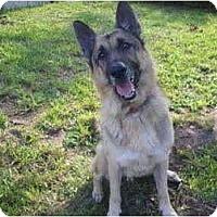 Adopt A Pet :: Charlie - Green Cove Springs, FL