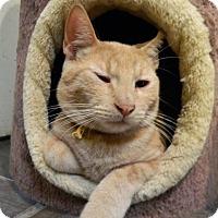 Adopt A Pet :: Frankie - The Colony, TX