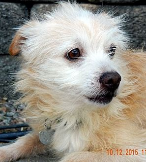Terrier (Unknown Type, Small) Mix Dog for adoption in Mission Viejo, California - NEWBERRY