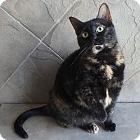 Adopt A Pet :: T.J. - Seguin, TX