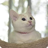 Adopt A Pet :: Liberty - Medina, OH