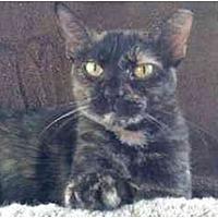 Adopt A Pet :: vanna - Tomball, TX