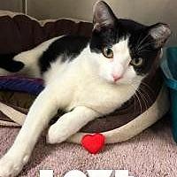 Adopt A Pet :: Tyson - Yukon, OK