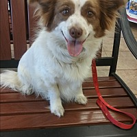 Adopt A Pet :: Cody - Crawfordville, FL