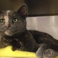 Adopt A Pet :: Solana - Anderson, IN