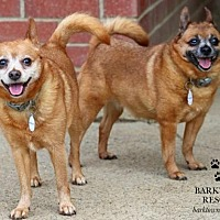 Adopt A Pet :: Pixie & Paisley - Bardstown, KY