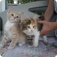 Adopt A Pet :: Camry & Casey - Arlington, VA