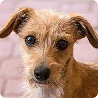 Adopt A Pet :: Candace - Tijeras, NM