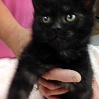 Adopt A Pet :: Cathy - Santa Fe, NM