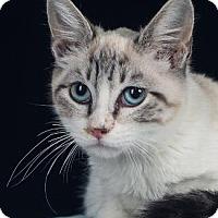 Adopt A Pet :: GUMDROP - Pt. Richmond, CA