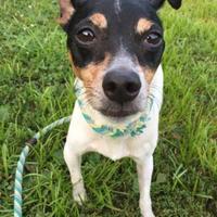 Adopt A Pet :: Roscoe - Chambersburg, PA