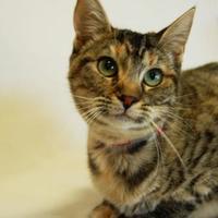 Adopt A Pet :: Bacardi - Toccoa, GA