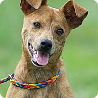 Adopt A Pet :: Willis - Providence, RI