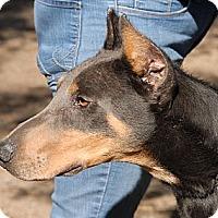 Adopt A Pet :: Arlo - Sun Valley, CA
