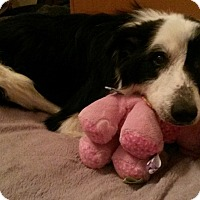 Adopt A Pet :: Zoya-New Update 3-24! - WAterford, WI
