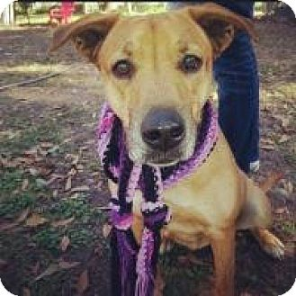 Black Mouth Cur Mix Dog for adoption in Grand Bay, Alabama - Celeste