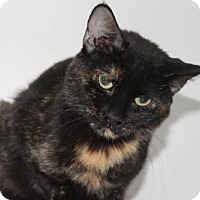 Adopt A Pet :: Annie - Hamilton, ON