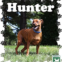 Miniature Pinscher Mix Dog for adoption in Fallston, Maryland - Hunter
