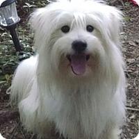 Adopt A Pet :: Olaf - Richmond, VA